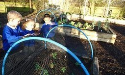 Inside the schools with edible playgrounds   Primary Science and Technology   Scoop.it