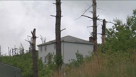 Tree damage makes tornado impossible to forget in Brimfield | Minney News | Scoop.it