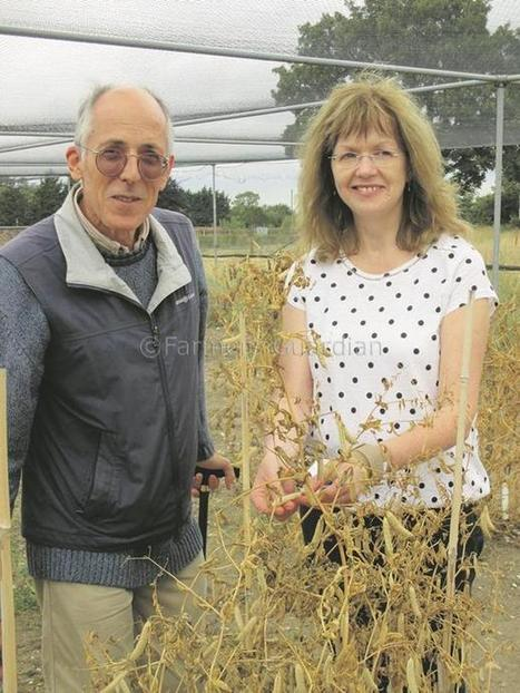 Science advances providing a boost for plant breeding | Features | Farmers Guardian | John Innes Centre on the web | Scoop.it
