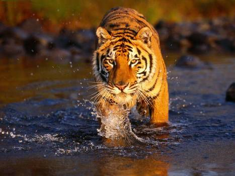 Golden Triangle And Tiger Tour | Golden Triangle Tours | Scoop.it