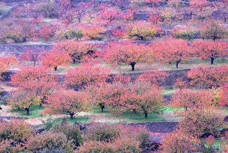 La otra cara de los cerezos del Jerte | GeoActiva Turismo de Aventura | Scoop.it