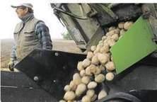 Soupçon de fraude géante sur le marché allemand de la pomme de terre | Questions de développement ... | Scoop.it