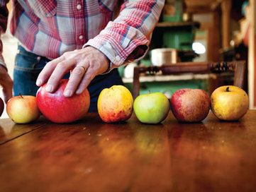 Why Your Supermarket Only Sells 5 Kinds of Apples | This Gives Me Hope | Scoop.it
