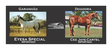 Eyesa Special x Cee Jay Cartel | Haras Medina | Scoop.it