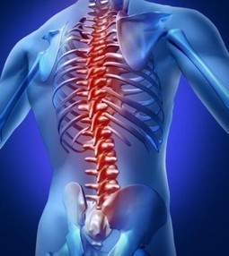 Muscles Back | Back Pain and Injury Prevention | Chiropractor San Diego-Back Pain San Diego | Scoop.it