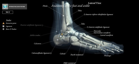 CL3VER for Medical presentations – Anatomy of the foot and ankle | CL3VER | opencl, opengl, webcl, webgl | Scoop.it