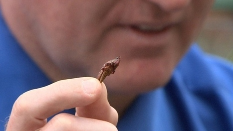 Insects. Food of the future? | Eco-Food Innovation | Scoop.it