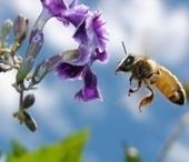 Recursos de apicultura | Enriquecimiento ambiental en animales en cautividad y mascotas. | Scoop.it