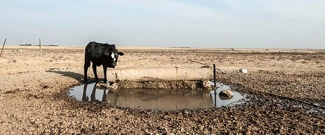Drought in southern Africa points to urgent need for climate change plans #Investorseurope Stockbrokers | Africa : Commodity Bridgehead to Asia | Scoop.it