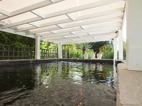 Alternative Eden Exotic Garden: The Big Koi Pond Reveal | Exotic Gardens | Scoop.it