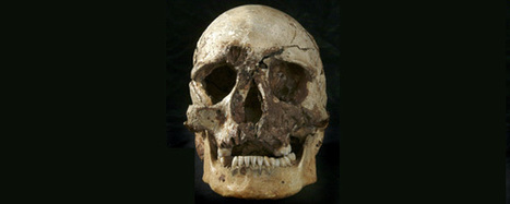 Who owns human remains? | openDemocracy | Museums and Ethics | Scoop.it