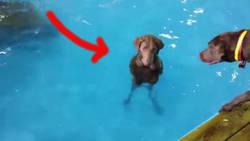 Ce chien n'aime pas du tout la piscine | CaniCatNews-actualité | Scoop.it
