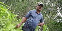 Siembran árboles para luchar contra la pobreza en Magdalena - ElTiempo.com | El Negocio De La Reforestacion. | Scoop.it