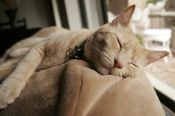 Why Do Cats Sleep So Much? | Hands of Time - Pets | Scoop.it