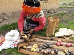 FAO -Nouvelles:Intégrer la biodiversité pour garantir la sécurité alimentaire et la nutrition - FAO | Agroalimentaire des Pays du Sud | Scoop.it