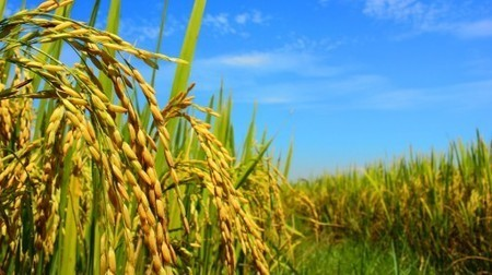 How big data is helping farmers save millions | Big Data Innovation | Scoop.it