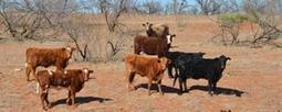 Agricultural and Rural Land Use - No Grass, No Water, No Cows | Human Geography | Scoop.it