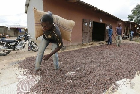 Watch This Cocoa Farmer's Joy As He Tastes Chocolate For The First Time - The Daily Hypes | Fairly Traded News | Scoop.it