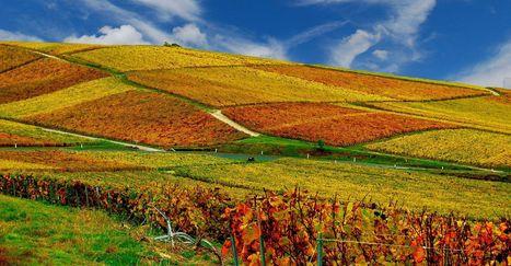 Dossier : les secrets géologiques des vins français | Vin 2.0 | Scoop.it