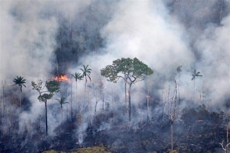Deforestation takes flight again in the Amazon | Greenpeace UK | ARAWA network news | Scoop.it