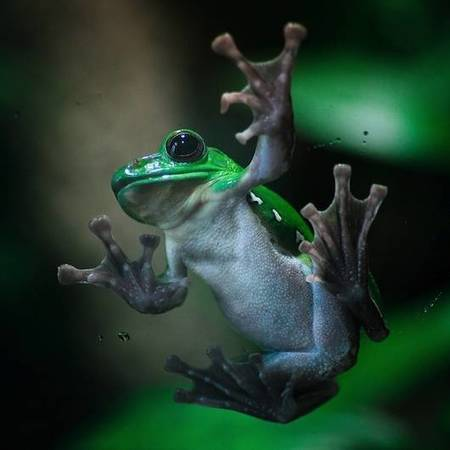 Happy Save the Frogs Day | Biodiversity protection | Scoop.it