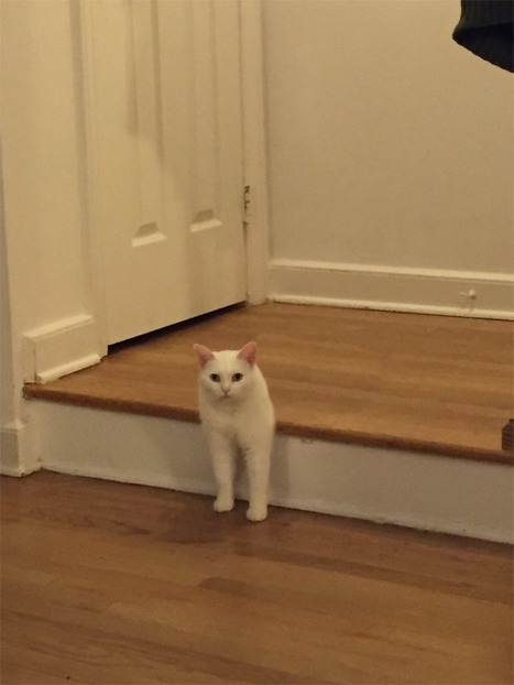 Awkward half-cat loafing on the stairs sparks Photoshop battle no one expected | Vloasis humor | Scoop.it