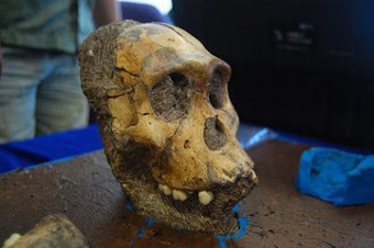 The Archaeology News Network: Ancient Human ancestors had unique diet   Pre-Modern Africa, the Middle East - and Beyond   Scoop.it