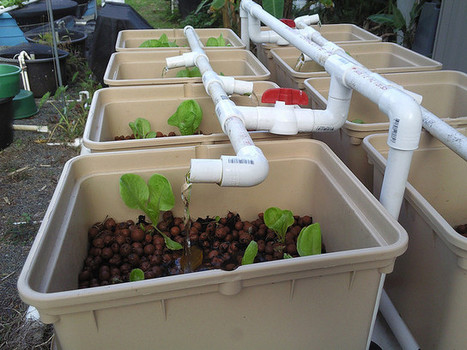 A Brief Introduction to Aquaponic Gardening | Alternative | Vertical Farm - Food Factory | Scoop.it