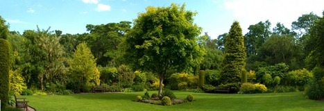Reputable and capable tree company S&S Tree Service in Garland TX | Reputable and capable tree company S&S Tree Service in Garland TX | Scoop.it