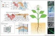 ScienceDirect.com - Current Opinion in Plant Biology - Plants and pathogens: putting infection strategies and defence mechanisms on the map | Plant Microbe interactions1 | Scoop.it