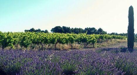 Prenez la pause provencale - Wine Passport | Route des vins | Scoop.it