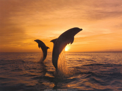 Male dolphins build complex teams for social success | Knowmads, Infocology of the future | Scoop.it