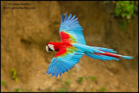 How to Photograph Birds in Flight   Arts Independent   Scoop.it