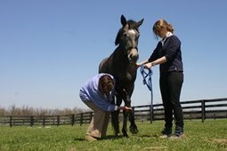 EPM Testing, Treatment Options Reviewed   Equine Health Care   Scoop.it