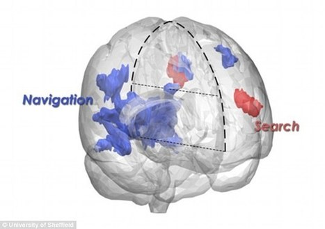 Why humans and dogs' brains are alike! | Kickin' Kickers | Scoop.it