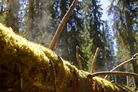 La biodiversité de la forêt suisse augmente | Le flux d'Infogreen.lu | Scoop.it