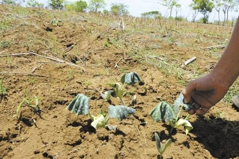 Sécheresse en Amérique Centrale - Vers une crise humanitaire - 16-decembre-2014.html | ONG et solidarité internationale | Scoop.it