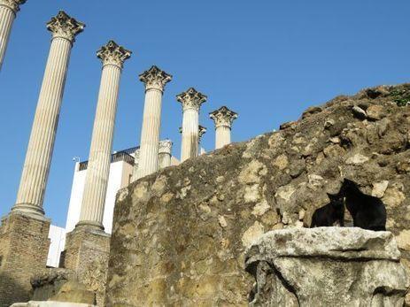 Córdoba: Okupas en el templo romano | LVDVS CHIRONIS 3.0 | Scoop.it