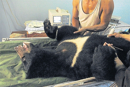 A grisly end | Bangkok Post: lifestyle | Animal Cruelty | Scoop.it