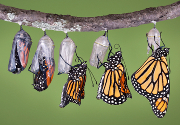 Leadership Transitions: How Not to Fail | Leadership Transitions | Scoop.it