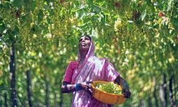 Is India ready for wine pilgrimages? | Vitabella Wine Daily Gossip | Scoop.it