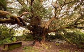 Meeting the oldest living thing on earth | The Integral Landscape Café | Scoop.it