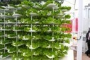 VertiCrop Processes 10,000 Plants Every 3 Days Using Vertical Hydroponic Farming | Vertical Farm - Food Factory | Scoop.it