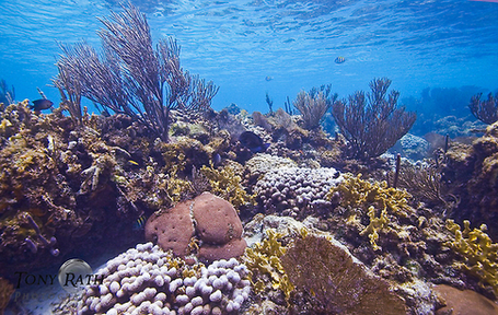 Coral Reef - at JungleDragon | Belize in Social Media | Scoop.it