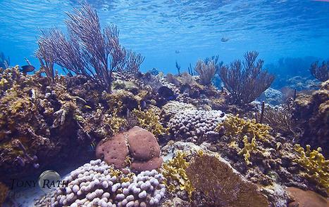 Coral Reef - at JungleDragon | Belize in Social Media | Scoop.it