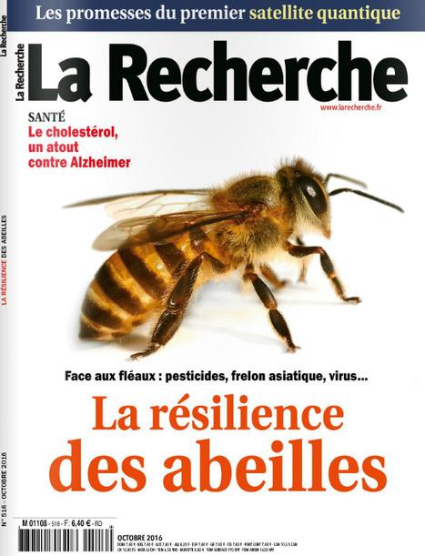 Un dossier sur la résilience des abeilles dans le prochain numéro de la Recherche (n°516 Octobre 2016) | La recherche en apiculture | Scoop.it