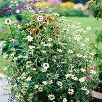 Top Butterfly Container Garden Ideas   Container Gardening   Scoop.it