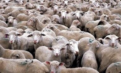 Les bases de la domination étatique et de la soumission populaire | Shabba's news | Scoop.it