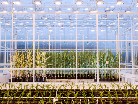 This High-Tech Greenhouse Tests What Crops Will Survive Climate Change | WIRED | climate change | Scoop.it