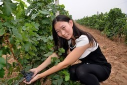 China Sprouting Homegrown Wine Culture | Vitabella Wine Daily Gossip | Scoop.it